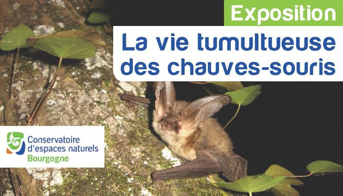 You are currently viewing Exposition au cinéma de Joigny